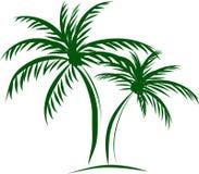 棕榈树用在白色backgr的椰子 免版税库存图片