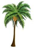 棕榈树用椰子 库存例证