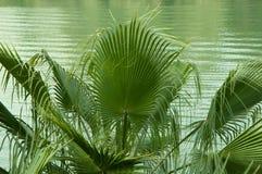 棕榈树用水 库存照片