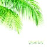棕榈树留下边界 免版税库存图片