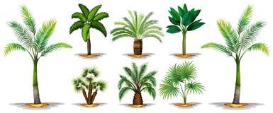 棕榈树的不同的类型 库存例证