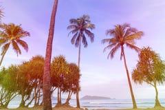 棕榈树的五颜六色的颜色在海滩的在夏季 免版税库存图片