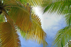 棕榈树的叶子反对天空的 库存照片