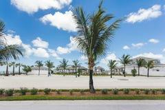 棕榈树的图象在度假村的 库存图片