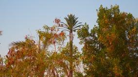 以棕榈树的形式电话塔 股票录像