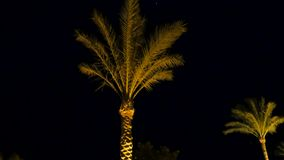 棕榈树的特写镜头 影视素材