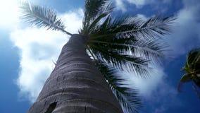 棕榈树的看法的底部 蓝色覆盖天空 有风的天气 影视素材