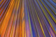棕榈树的美好的样式 免版税图库摄影