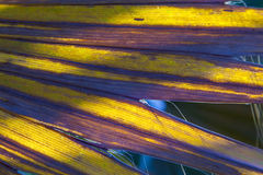 棕榈树的美好的样式 免版税库存图片