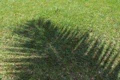 棕榈树的阴影在塞舌尔的 免版税库存照片