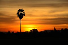 棕榈树的黑剪影有一朵云彩,并且太阳是 免版税图库摄影