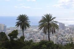 棕榈树的&檀香山 库存图片