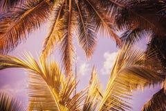 棕榈树离开背景 例证百合红色样式葡萄酒 免版税库存照片