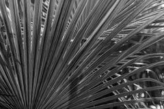 棕榈树离开背景 库存照片