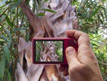棕榈树纹理秘密审议反光镜 免版税库存照片