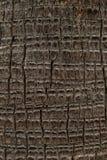 棕榈树纹理 免版税库存照片