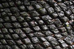 黑棕榈树纹理 免版税图库摄影
