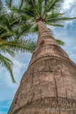棕榈树背景 库存图片