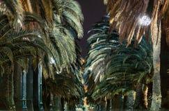 棕榈树胡同在晚上 库存照片