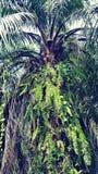 棕榈树自然风景视图 库存照片