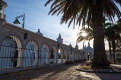 棕榈树苏克雷,玻利维亚 免版税库存照片