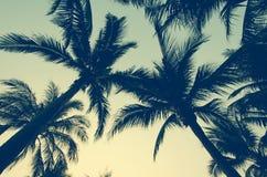 棕榈树葡萄酒 免版税库存照片