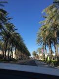 棕榈树行在Las安赫莱斯,加利福尼亚 库存图片