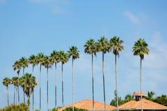棕榈树行 免版税库存照片