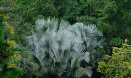 棕榈树被种植在植物园在新加坡 免版税库存照片