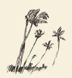 棕榈树被画的传染媒介剪影剪影  库存图片