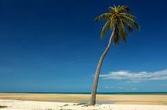 棕榈树视图 免版税库存照片