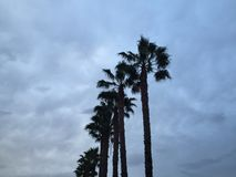 棕榈树车道 库存图片