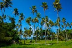 棕榈树领域 免版税库存照片