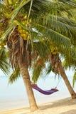 棕榈树风景  免版税库存图片