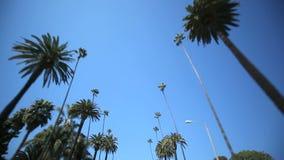 棕榈树驱动 股票录像
