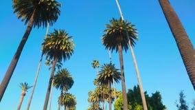 棕榈树驱动 股票视频