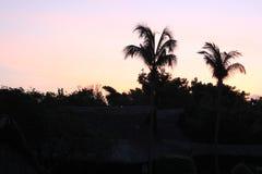 棕榈树黑剪影在黎明 免版税库存图片