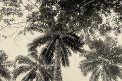 棕榈树,似亚马逊密林 免版税库存照片