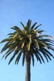 棕榈树,加州 库存照片