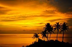 棕榈树,明亮的黄色云彩,在一个热带海岛上的浪漫海滩剪影在日落期间 库存照片