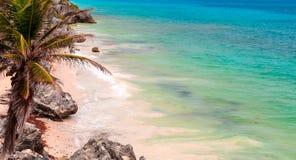 棕榈树,海,棕榈树 加勒比海 免版税图库摄影