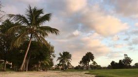 棕榈树,热带,风,晚上,自然 股票录像