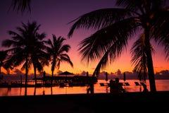 棕榈树,葡萄酒过滤器剪影在日落的 免版税图库摄影