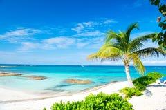 棕榈树,蓝色海,天空在伟大的马镫岩礁,巴哈马 免版税库存照片