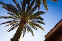 棕榈树,马略卡,西班牙2014年 免版税库存照片
