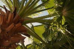 棕榈树从上面 免版税图库摄影