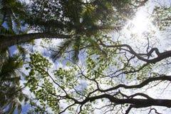 棕榈树从下面 库存照片
