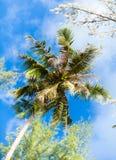 棕榈树从下面 免版税库存图片