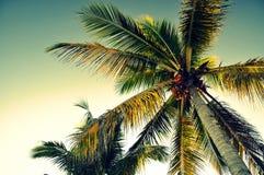 棕榈树从下面- Panglao,保和岛,菲律宾 免版税图库摄影