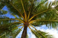 棕榈树离开与天空在背景-向上射击-储蓄照片 库存照片